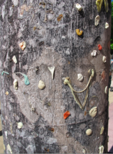 chewed gum adorns Lincoln Road's famous tree